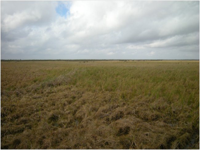 Floating marsh, Barataria Preserve