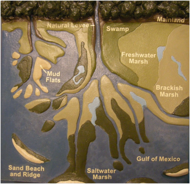 Exhibit depicting the interplay of delta geomorphology and ecological communities, Barataria Preserve Visitor Center