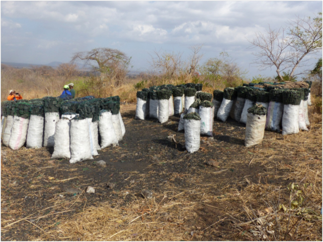 Bags of charcoal from a forest reserve waiting for shipment to market (Photo courtesy of Daulos Mauambeta)