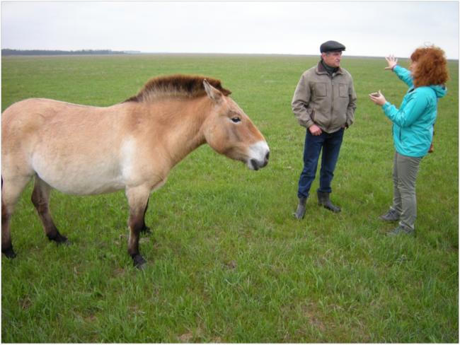Conference at Askania Nova with Przewalski's horse, Biosphere Reserve Director Viktor Gavrilenko, and biodiversity consultant Alena Tarasova-Krasiieva