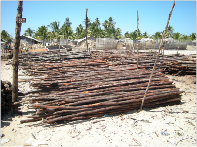 "Mangrove poles for house construction for sale in a local ""lumberyard"""