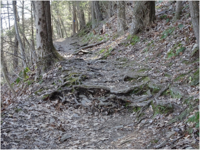 Trail up Mt. Holyoke over hemlock roots, 23 April 2018