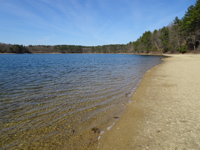 Along the shore of Walden Pond, 24 April 2018
