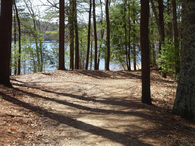 View of Walden Pond from Thoreau's house site, 24 April 2018
