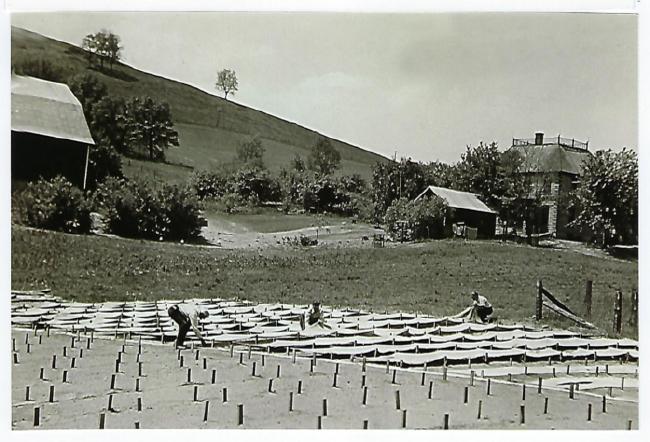 Lee Farm