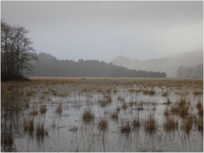 High tide flooding the restored Salmon River estuary saltmarsh