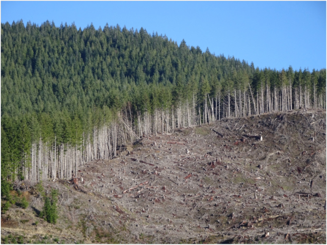 Clearcut on commercial forest land, upper Salmon River watershed