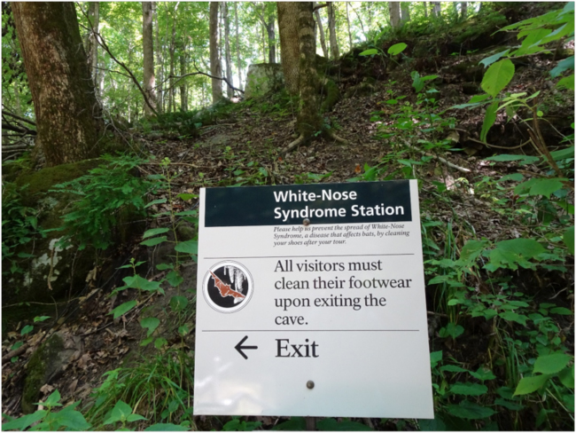 Notice about white-nose syndrome and mandatory shoe cleaning at historic entrance