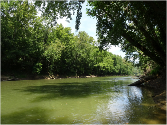 Green River near the outflow of Mammoth Cave's River Styx Spring