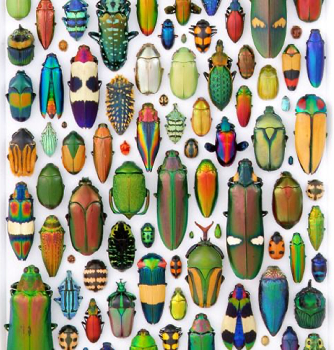 Beetle collection detail
