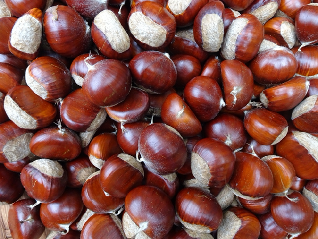 Chestnut harvest, September 2020