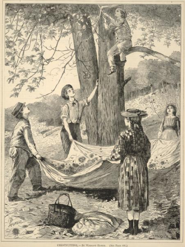 Winslow Homer. 1870. Chestnutting. Wood engraving on paper, image courtesy of Smithsonian American Art Museum.