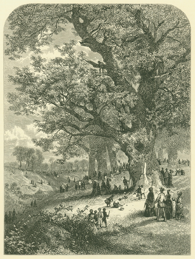J. W. Lauderbach. 1878. Gathering Chestnuts. Engraving of chestnut harvesting in Fairmount Park, Philadelphia; image courtesy of the American Chestnut Foundation.