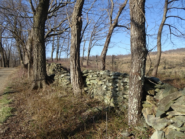 Stone wall along the old Boston Mill Road, Sky Meadows State Park