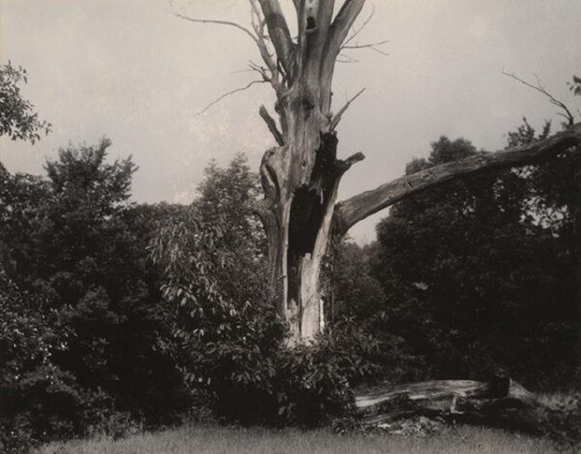 Alfred Stieglitz, Dead Chestnut Tree, probably 1937.  Courtesy of the National Gallery of Art.