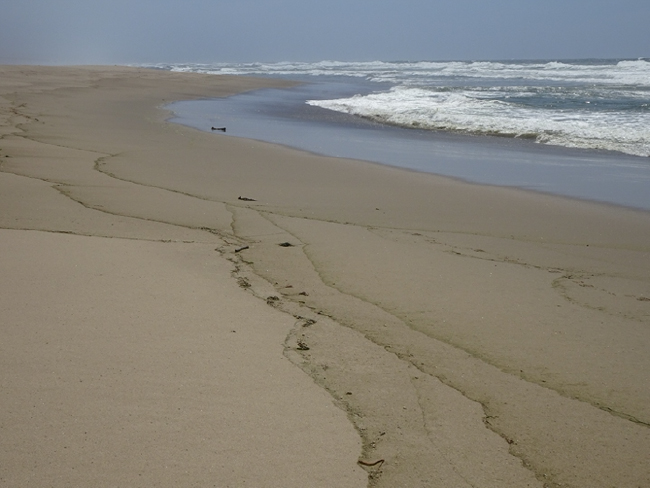 Between Abbots Lagoon and Kehoe Beach, Point Reyes National Seashore